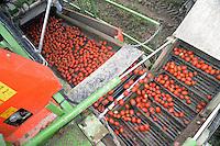 - tomatoes automated harvesting in the province of Piacenza....- raccolta automatizzata dei pomodori in provincia di Piacenza....