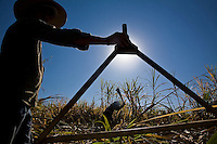 Sugarcane cutters - compass, tool used for measuring worker´s daily production. Cosmopolis city region, Sao Paulo State, Brazil. Biofuel, Ester ethanol and sugar plant.