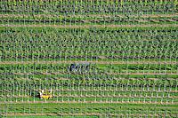 Baumschule: EUROPA, DEUTSCHLAND, NIESDERSACHSEN, BECKEDORF, (EUROPE, GERMANY), 22.09.2010: Europa, Deutschland, Niedersachsen, Nordheide, Baumschule, Baum, Baeume, Pflanzen, Zucht, Reihe, Reihen, aufgereiht, aufgereihte, Pflanze, Baumpflanze, Baumpflanzen, Natur, Umwelt, Luftbild, Luftbilder, Luftaufnahme, Luftaufnahmen, Uebersicht, Ueberblick, Vogelperspekte .c o p y r i g h t : A U F W I N D - L U F T B I L D E R . de.G e r t r u d - B a e u m e r - S t i e g 1 0 2, .2 1 0 3 5 H a m b u r g , G e r m a n y.P h o n e + 4 9 (0) 1 7 1 - 6 8 6 6 0 6 9 .E m a i l H w e i 1 @ a o l . c o m.w w w . a u f w i n d - l u f t b i l d e r . d e.K o n t o : P o s t b a n k H a m b u r g .B l z : 2 0 0 1 0 0 2 0 .K o n t o : 5 8 3 6 5 7 2 0 9.V e r o e f f e n t l i c h u n g  n u r  m i t  H o n o r a r  n a c h M F M, N a m e n s n e n n u n g  u n d B e l e g e x e m p l a r !.