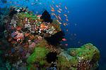 Marco Vincent, Philippines, Puerta Galera, Verde Islands reefs