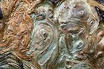 Exposed burl on tree, Mount Rainier National Park, Washington, USA