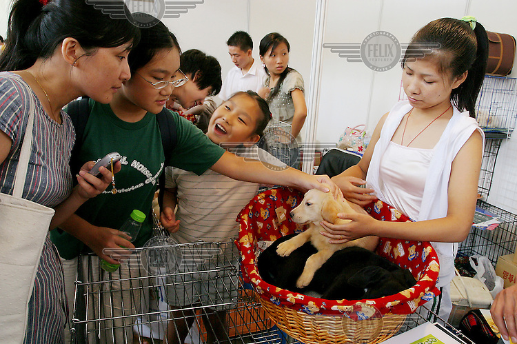 Young girls stroking a dog at the 7th Asian Pet Exhibition in Shanghai's main exhibtion centre.