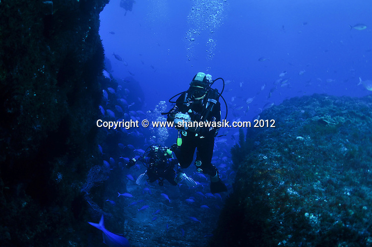 Underwater Photography can be very rewarding in the favourable condition at Raoul Island, Kermadecs.