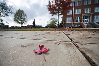 Fall leaves between Lee Hall and McCain.<br />  (photo by Megan Bean / &copy; Mississippi State University)