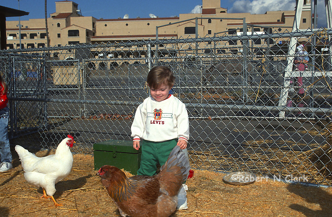 Boy with chickens at county fair