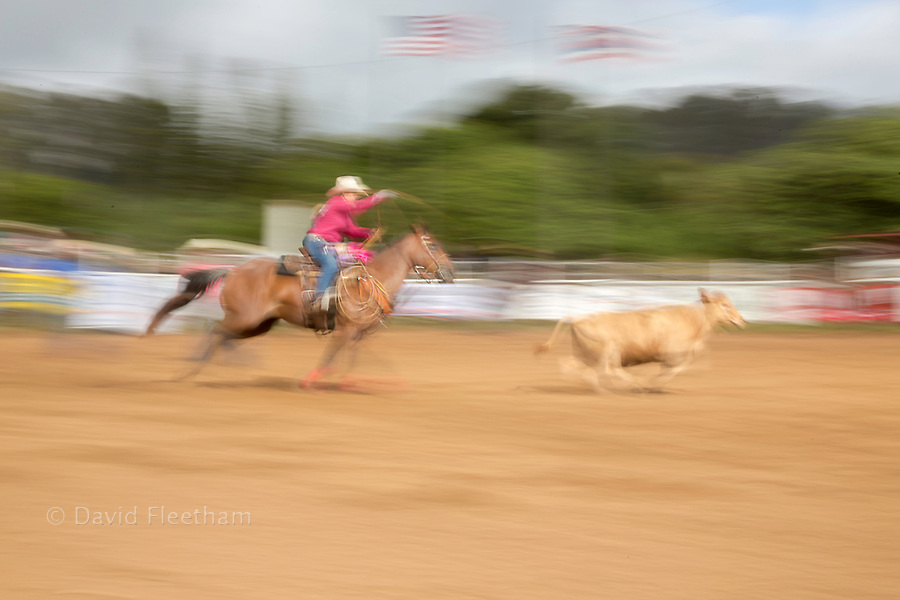 This blurred image of a rodeo bull roper brings motion to a still photograph at the Makawao 4th of July Rodeo, Oskie Rice Arena, Makawao, Hawaii, USA.