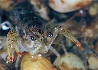 Crayfish, Md.