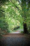 Ireland - Primeval Forest | Great Oaks