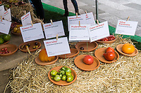 Display of different varieties of tomatoes used in NJ based Lycored's world's largest tomato salad in Times Square in New York on Tuesday, October 13, 2015. Lycored, a wellness company, created the 1000 lb salad with over 100 varieties of tomatoes with half going to passer by and the other half donated to City Harvest. October is National Tomato Month. (© Richard B. Levine)