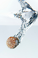 Sea shell splashing underwater, white background, studio