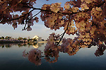 2013 National Cherry Blossom Festival -- Jefferson Memorial