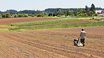 Tilling a field on the farm.  Community Supported Agriculture Farm, 47th Avenue Farm, plowed and ready for sprint planting.  Luscher Farms Park, City of Lake Oswego, Oregon, USA.