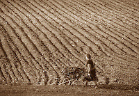Contadini nei campi. Peasants in the fields..