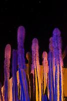 light painted cactus garden.