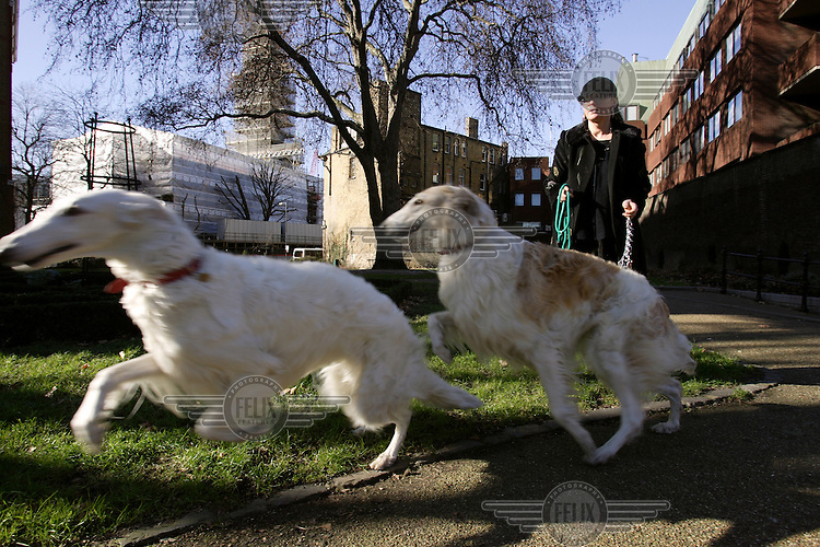 Olga Sienko, an affluent Polish art gallery owner walks her dogs near her home in South East London.