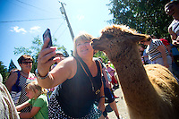 Crystal Moss, from Long Beach, CA takes a selfie with a llama at the Outback Kangaroo Farm photographed on July 20, 2016 in Arlington, WA. Animals are petted  (photo © Karen Ducey Photography)