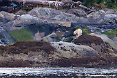 Alaskan Ferry Bear