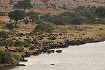 Elephant (Loxodonta africana) buffles et hypopotames