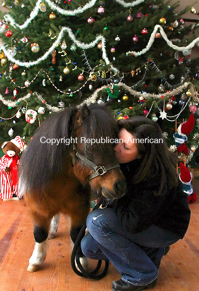 WOODBURY, CT- 09 DECEMBER 2006 - 120906JW07.jpg  --Miniature horse Willie Wild gets a kiss from Te Kokomiko Miniature Horse Farm employee Joan Oullet Saturday afternoon in the farms barn / hall area. Oullet's holiday remeberance is of the farms owner and Willie's trainer Louis Voegeli, Sr. who recently passed away before Thanksgiving Day.  Voegeli used his hall space to hold holiday parties for underprivileged children.  Jonathan Wilcox Republican-American