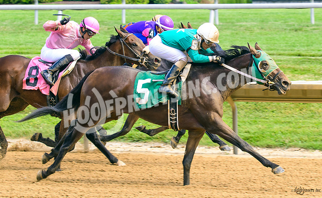 Wisdom of Solomon winning at Delaware Park on 7/1/17