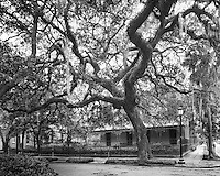 &quot;Madison Square Tree&quot;<br />