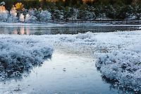 Norway, Sandnes. Winter in Rogaland Arboretum.