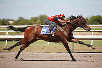 #115Fasig-Tipton Florida Sale,Under Tack Show. Palm Meadows Florida 03-23-2012 Arron Haggart/Eclipse Sportswire.