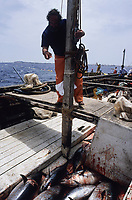 ITALY, Sicily, Egedian island Favignana, La Mattanza, traditional fishing of bluefin Tuna fish, rais (chief) Gioacchino Cataldo counting the catch