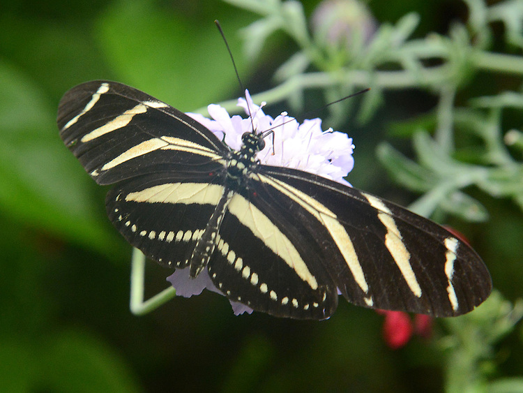 A selection of butterflies photographed at the Butterfly Farm, Straffan, County Kildare. Photo:Colin Bell/pressphotos.ie