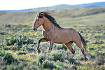 Wild Horses of Sand Wash Basin Colorado