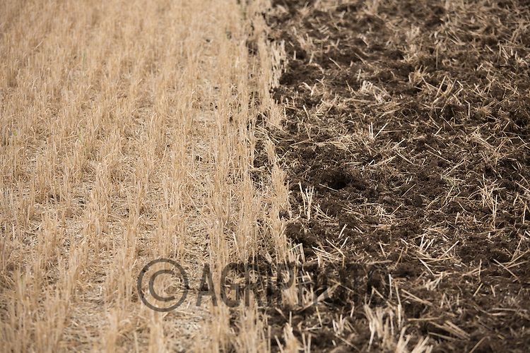 Stubble being drilled with Oilseed rape<br /> Picture Tim Scrivener 07850 303986<br /> &hellip;.Covering agriculture in the UK&hellip;.