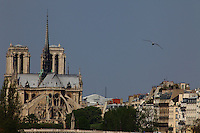 A view of the back of the church of Notre Dame in Paris, with the façades of some typical buildings and a seagull. Digitally Improved Photo.