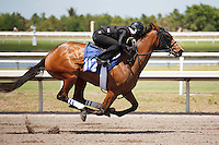 #112Fasig-Tipton Florida Sale,Under Tack Show. Palm Meadows Florida 03-23-2012 Arron Haggart/Eclipse Sportswire.