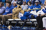 Scratch lounges on the chars while watching the game during the game against the Florida Gators at Rupp Arena on February 6, 2016 in Lexington, Kentucky. Kentucky defeated Florida 80-61.
