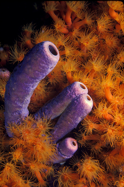 Sponges surrounded by coral polyps