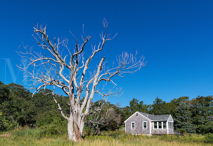 Secluded cottage with huge dead tree, Cape Cod, Massachusetts, USA