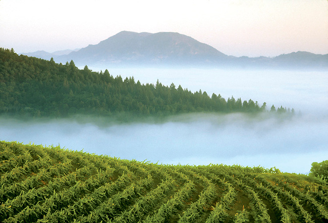Smith-Madrone vineyard with Mt. St. Helena