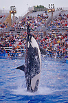 Sea World Aquatic Park Shamu performing with animal trainier with spectators looking at killer whale show San Diego California USA