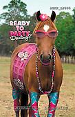 Samantha, ANIMALS,  photos,+horses,++++,AUKPLP096,#A# Humor, lustig, divertido