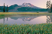 Leafy arnica<br /> Sparks Lake and South Sister<br /> Deschutes National Forest<br /> Cascade Range,  Oregon