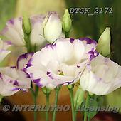 Gisela, FLOWERS, BLUMEN, FLORES, photos+++++,DTGK2171,#f#