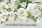 Maira, FLOWERS, BLUMEN, FLORES, photos+++++,LLPPA15032,#F#