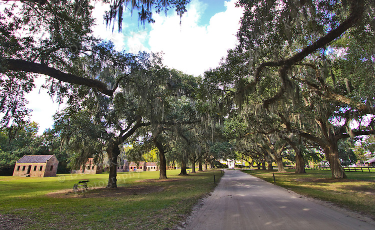 Boone Hall Plantation Live Oaks Driveway Charleston South Carolina