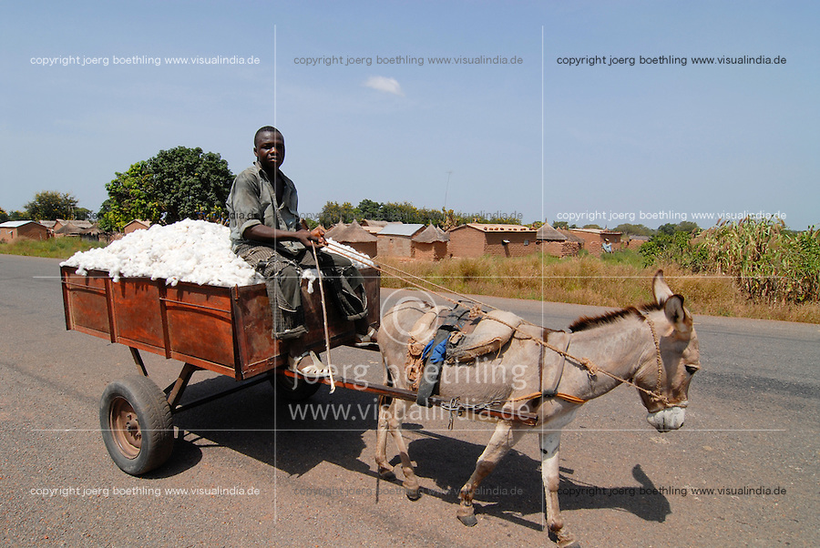 "Afrika Mali Helvetas Biobaumwolle Projekt - Transport der Baumwolle vom Feld ins Dorf mit Eselskarren | .Western Africa Mali - transport of organic cotton after harvest with donkey cart .| [ copyright (c) Joerg Boethling / agenda , Veroeffentlichung nur gegen Honorar und Belegexemplar an / publication only with royalties and copy to:  agenda PG   Rothestr. 66   Germany D-22765 Hamburg   ph. ++49 40 391 907 14   e-mail: boethling@agenda-fototext.de   www.agenda-fototext.de   Bank: Hamburger Sparkasse  BLZ 200 505 50  Kto. 1281 120 178   IBAN: DE96 2005 0550 1281 1201 78   BIC: ""HASPDEHH"" ,  WEITERE MOTIVE ZU DIESEM THEMA SIND VORHANDEN!! MORE PICTURES ON THIS SUBJECT AVAILABLE!!  ] [#0,26,121#]"