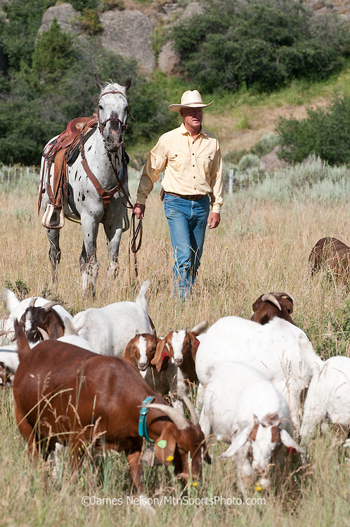Mark Harbaugh, Patagonia fly fishing representative and goat rancher, rides herd on his chemical-free noxious weed control crew grazing on a patch of leafy spurge in east Idaho.