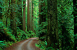 Jedediah Smith Redwoods State Park dirt road going through redwood forest California USA