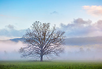 Great Smoky Mountains National Park, TN/NC: Morning sun and clearing fog in Cades Cove, early spring