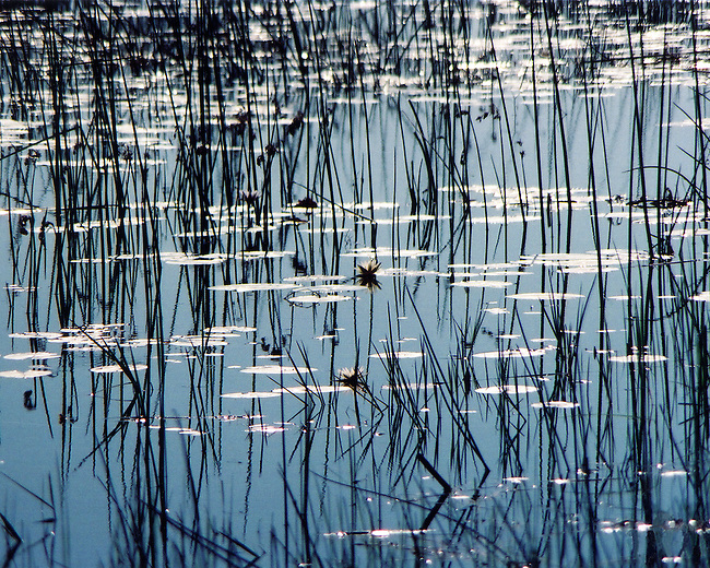 Reflection of the blue, blue sky and the grasses of the Okavango Delta - the world's largest inland delta.