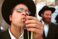 "An ultra-Orthodox Jewish man inspects the tips of a Lulav, palm branches used during the upcoming Sukkot festival, September 30, 2001 in Jerusalem's Mea Shearim neighborhood. The 8-day festival, known in English as the ""Feast of the Tabernacles,"" commemorates the ancient Hebrews' 40 years of wandering in the desert after their exodus from Egypt thousands of years ago. Photo by Quique Kierszenbaum"