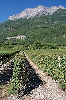 Europe/France/Rhone-Alpes/73/Savoie/Env de Saint-Pierre-d'Albigny : Vignoble AOC Vins de Savoie